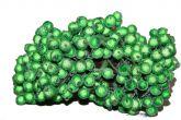 Калина сахарная зеленая упаковка   10шт